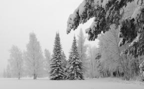 hiver, arbres, neige, Spruce, paysage