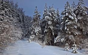 зима, лес, снег, ели, деревья, пейзаж