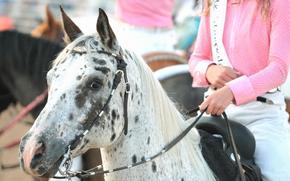 настроения, девушка, розовый, лошадь, конь, пятнистая, фон, обои