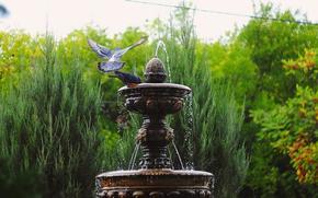 Trees, shrubs, greens, fountain, water, drops, spray, Birds, Pigeons