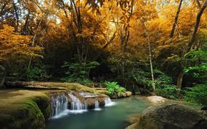 foresta, alberi, acqua