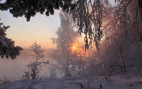 冬季, 雪, 树, 景观