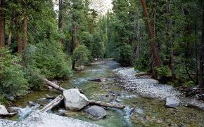 Wald, Sommer, Fluss, Steine, Natur
