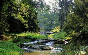 夏, 川, 森, 滝, 風景