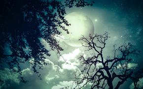 sky, moon, full moon, Crown, Trees, branch