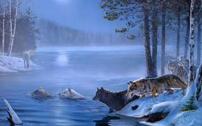 Wolves, forest, swamp, Trees, ice