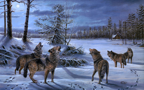 Wolves, howl, home, forest, night