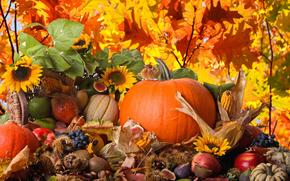 pumpkin, corn, vegetables, grapes, apples, FIGS, pears, kiwi, fruit, chestnuts, Sunflowers, nature, autumn