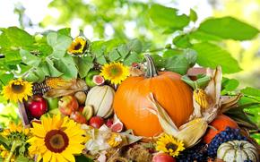 Pumpkin, corn, pears, apples, grapes, FIGS, fruit, Berries, vegetables, Sunflowers, nature