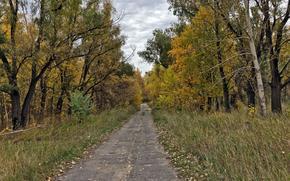 дорога, лес, осень, пейзаж