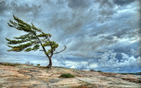 ciel, arbre solitaire, paysage