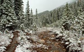 neve, rvores, seguir, floresta, Outono