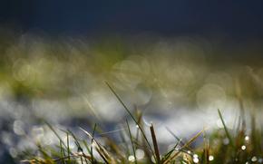 草, 青菜, 上午, 滴, 水, 露, 宏, 背景虚化, 强光