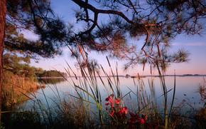 landscape, nature, river, lake, tree