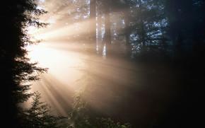 paesaggio, natura, albero, bellezza, luce
