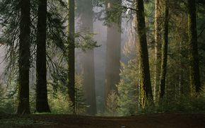 natura, drzewo, las, pikno