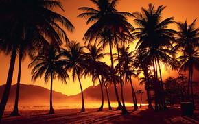 paesaggio, paradiso, tramonto, natura, albero, bellezza