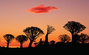 африка, закат, облака, дерево, лес