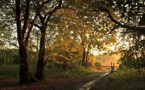 дорога, лес, забор, осень, пейзаж