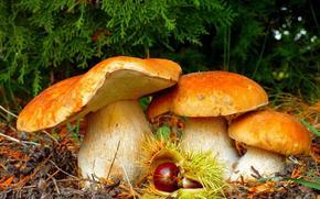 森林, 蘑菇, 美女