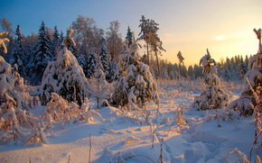 hiver, fort, arbres, paysage