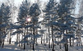 Winter, snow, Trees, landscape, sun, highlight