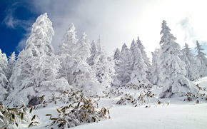 Winter, snow, Trees, landscape, day