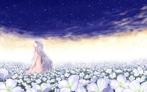 field, white flowers, girl, nude