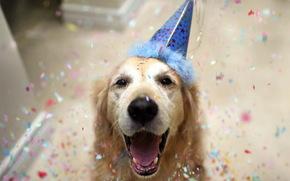 собака, друг, праздник