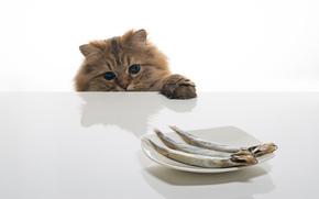 daisy, © benjamin torode, рыба, кошка, стол