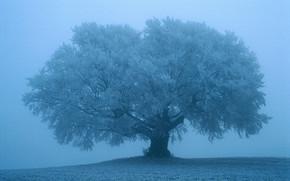 paesaggio, natura, albero, gelo, bellezza