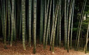 пейзаж, природа, дерево, бамбук, лес, красота