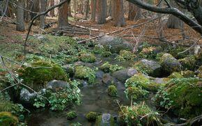 landscape, nature, tree, forest, beauty, creek, river, stone