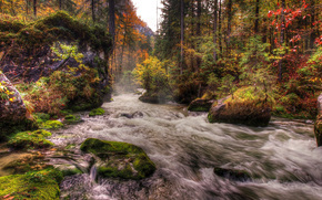 forest, river, flow, stones, moss, Trees, autumn