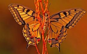 Бабочка, лиана, красота, осень.