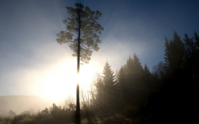 Morning, forest, light, landscape