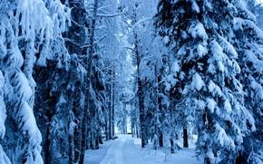 冬, 森, 木, スプルース, 道路