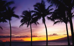 sea, landscape, paradise, sunset, nature, tree, palm, beauty
