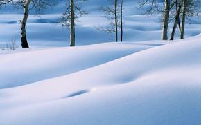 景观, 性质, 树, 森林, 美女, 冬季, 雪