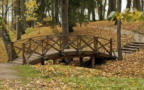 公园, 秋天, 性质, 桥