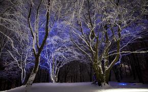 зима, ночь, парк, деревья, пейзаж