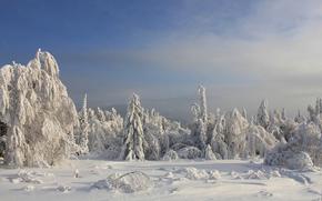 inverno, neve, alberi, paesaggio
