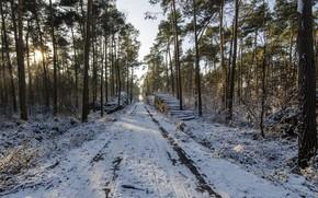 зима, лес, дорога, дрова, пейзаж