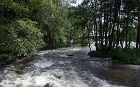 fiume, foresta, alberi, paesaggio