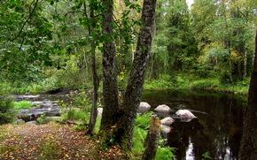 piccolo fiume, foresta, pietre, proroda, paesaggio
