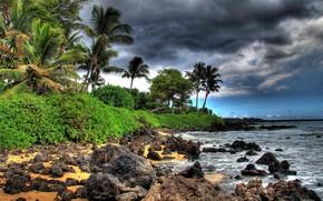 mar, Palms, piedras, costa
