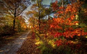 autunno, strada, alberi, foresta, paesaggio