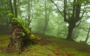 foresta, natura, alberi