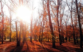 evening, autumn, park, Omsk