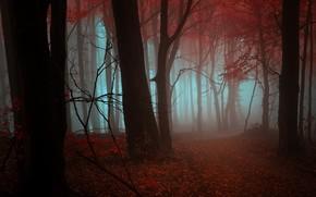 осень, лес, туман, деревья, листья, красный, оранжевый